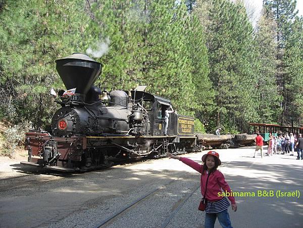 sugar pine森林蒸汽火車