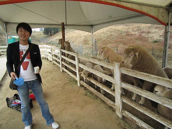 導遊小權示範餵羊