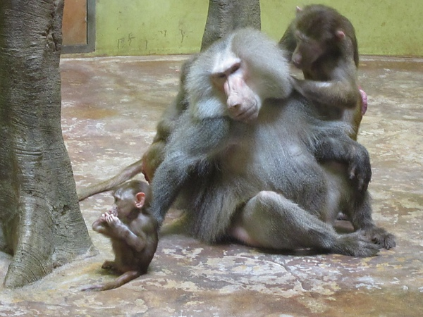猴子一家行樂圖