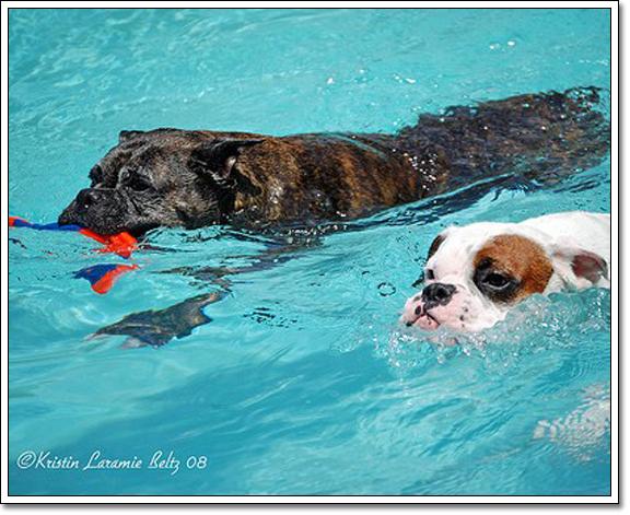 泳鏡,游泳,黑貂泳鏡,兒童泳鏡,學游泳