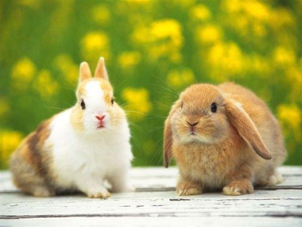 兔寶寶02.jpg