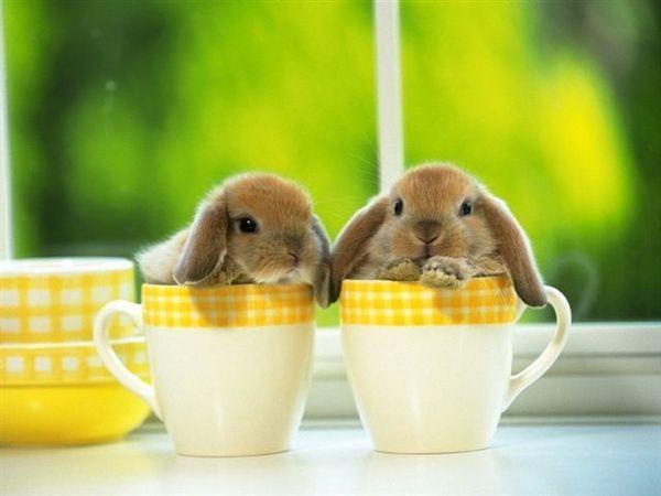 兔寶寶03.jpg