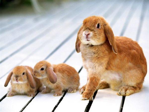 兔寶寶04.jpg