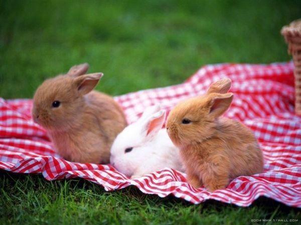 兔寶寶05.jpg
