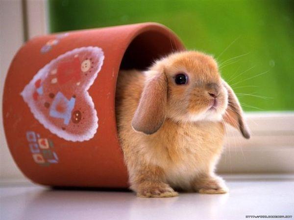 兔寶寶06.jpg
