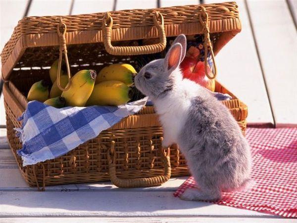 兔寶寶07.jpg
