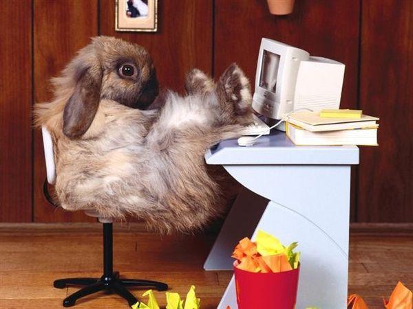 兔寶寶08.jpg