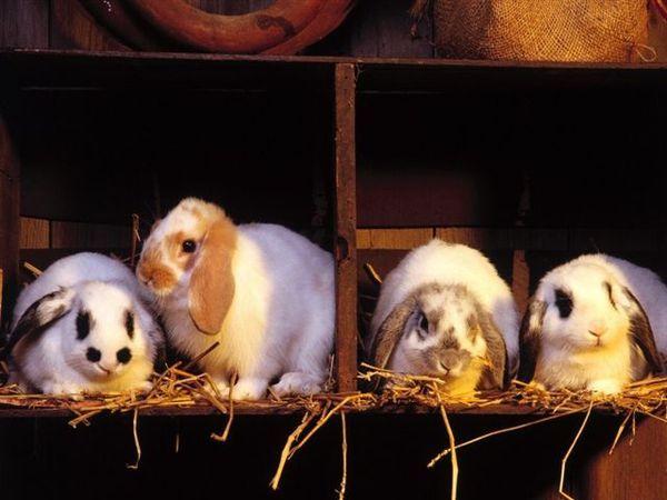 兔寶寶10.jpg