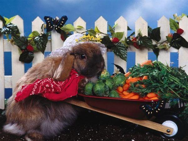 兔寶寶11.jpg