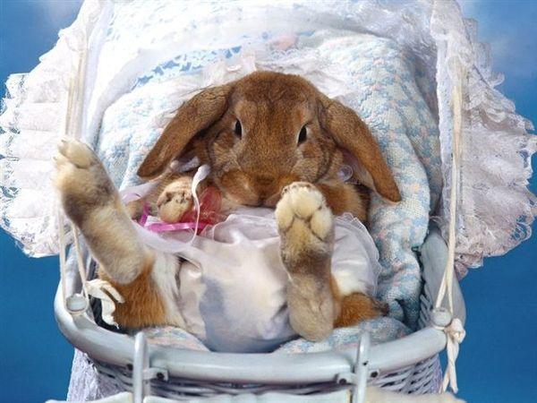 兔寶寶12.jpg