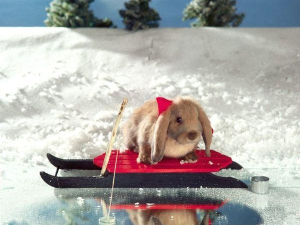 兔寶寶13.jpg