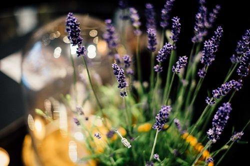 PEN_33_lavender1.jpg