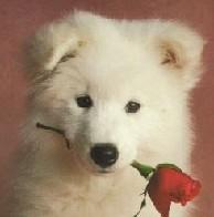 咬花花的狗