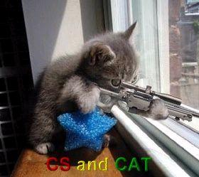 CS cat