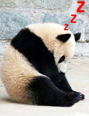 熊貓打瞌睡
