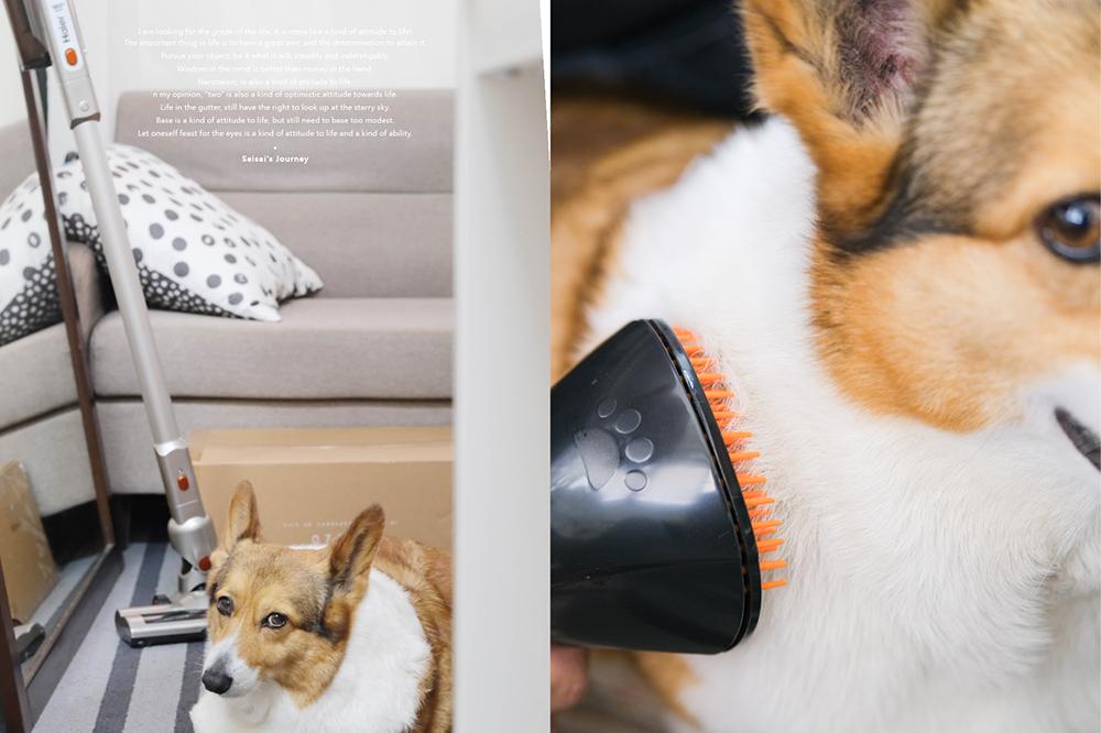 海爾吸塵器 寵物吸塵器 寵物梳毛 海爾寵物吸塵器 海爾10in1寵物吸塵器 寵物吸頭 寵物吸塵器吸頭 Saisai%5Cs Journey01.png
