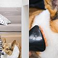 海爾吸塵器 寵物吸塵器 寵物梳毛 海爾寵物吸塵器 海爾10in1寵物吸塵器  寵物吸頭 寵物吸塵器吸頭 Saisai's Journey01.png