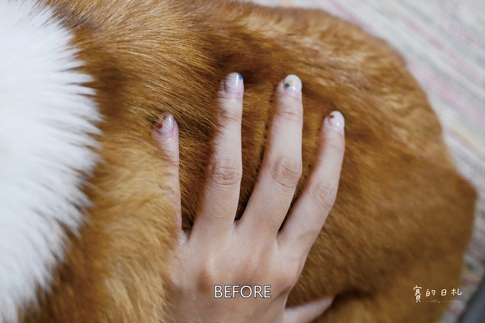 自然本色寵物飼料 Nature%5Cs Protection 狗狗飼料推薦 柯基飼料推薦 毛色飼料 毛光澤飼料 賽的日札16.png