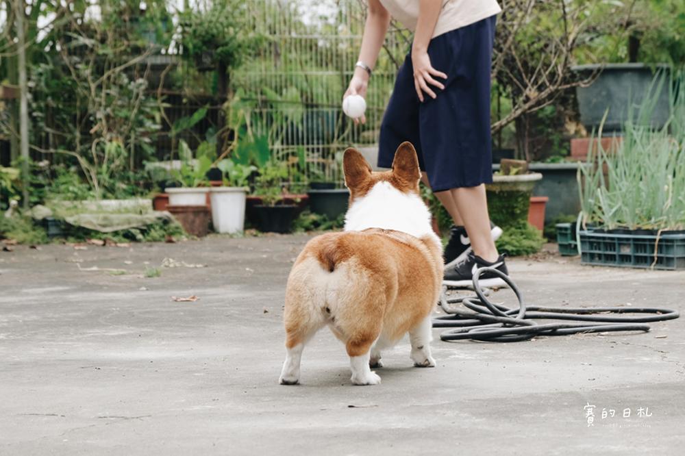 自然本色寵物飼料 Nature%5Cs Protection 狗狗飼料推薦 柯基飼料推薦 毛色飼料 毛光澤飼料 賽的日札20.png