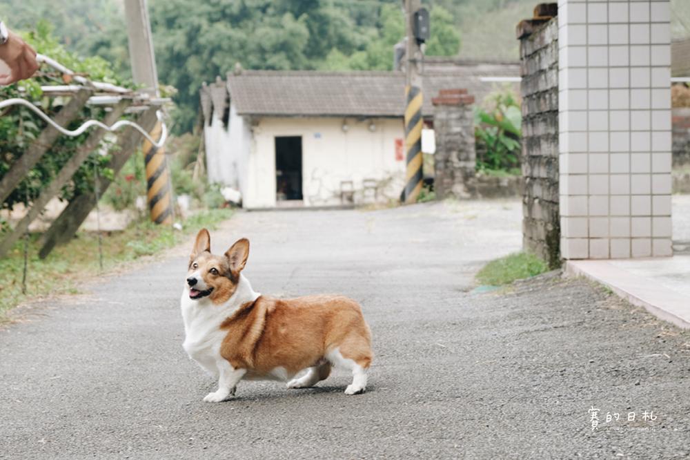 自然本色寵物飼料 Nature%5Cs Protection 狗狗飼料推薦 柯基飼料推薦 毛色飼料 毛光澤飼料 賽的日札19.png