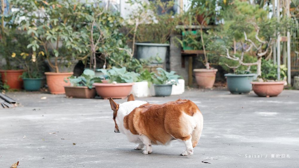 自然本色寵物飼料 Nature%5Cs Protection 狗狗飼料推薦 柯基飼料推薦 毛色飼料 毛光澤飼料 賽的日札11-2.png