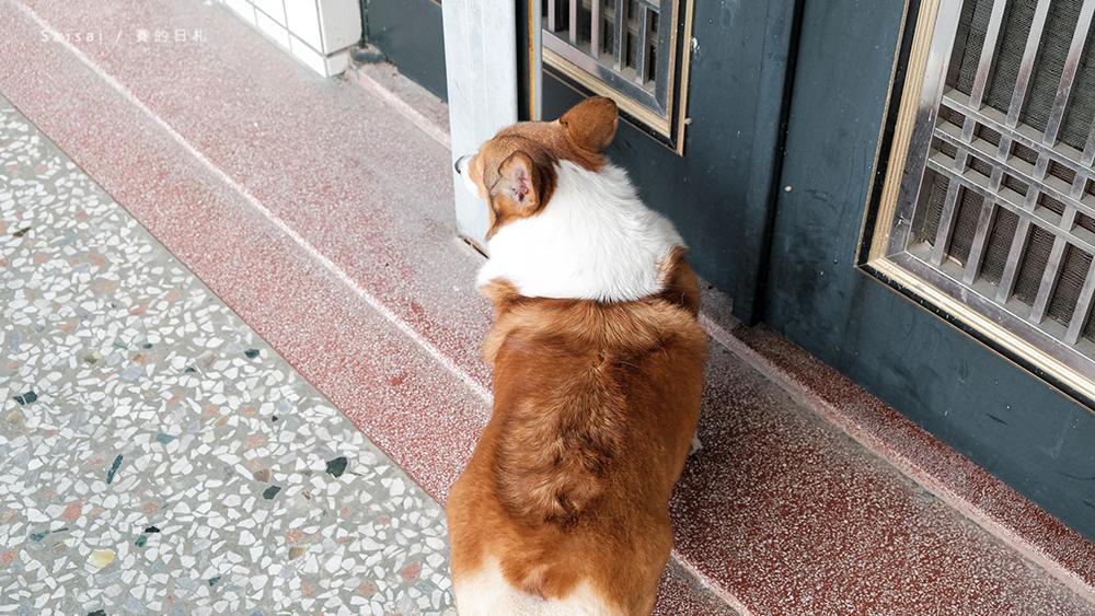自然本色寵物飼料 Nature%5Cs Protection 狗狗飼料推薦 柯基飼料推薦 毛色飼料 毛光澤飼料 賽的日札11-3.png