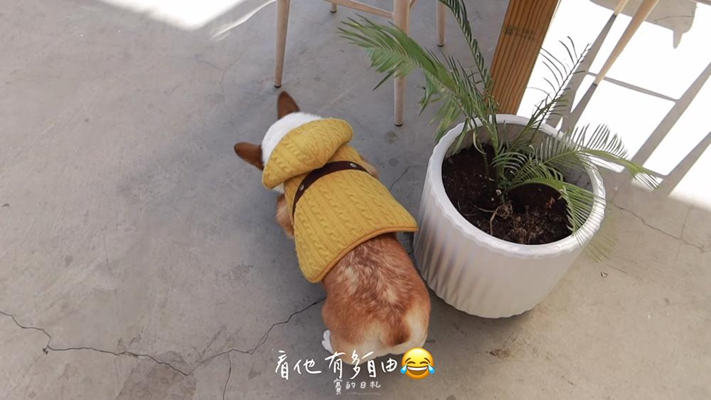 台中南區寵物餐廳 好果實好食咖啡咖啡 賽的日札 台中美食 寵物友善_0035.png