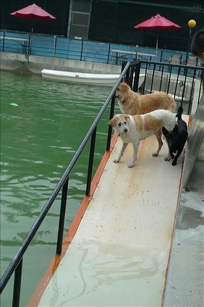 還有岸上三隻狗