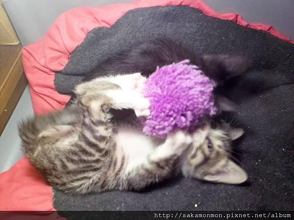 「貓」線球