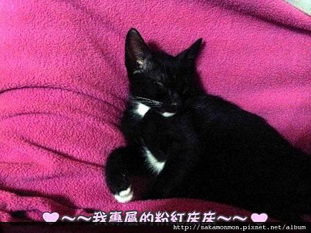 2012-03-21 露咪新家生活照
