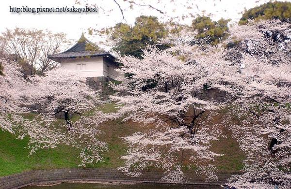 桜花と由来
