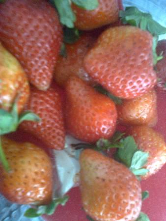老師送的草莓