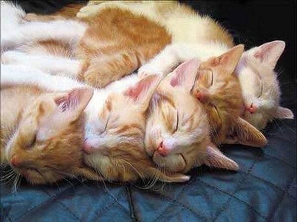 523867__hugging-kittens-for-carmen_p.jpg