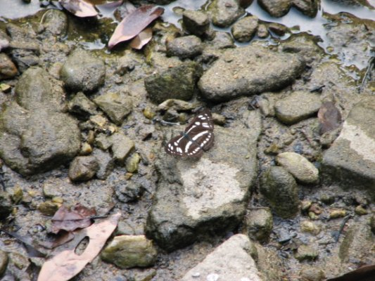 中環峽蝶2