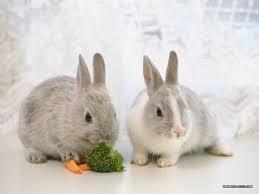 """""""兔子""""的圖片搜索結果"""
