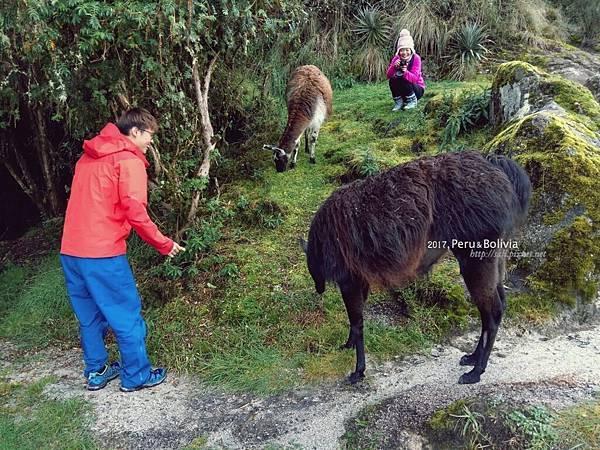peru_Inca trail_2121.jpg