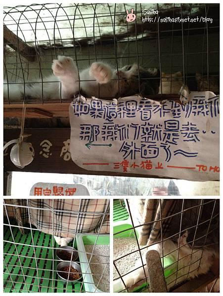 兔兔3_meitu_31.jpg