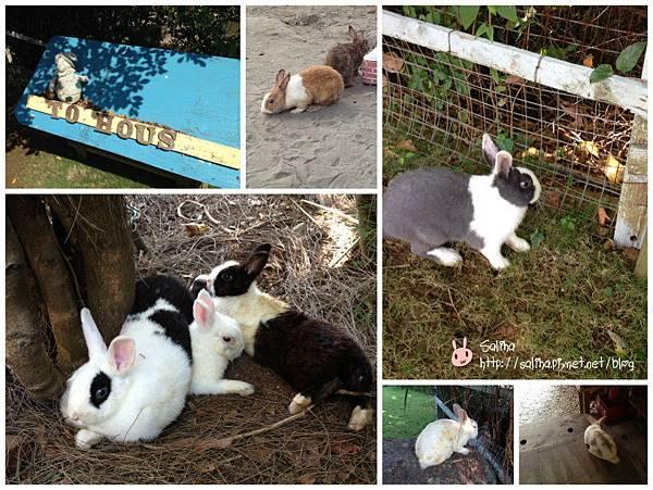 兔兔4_meitu_30.jpg