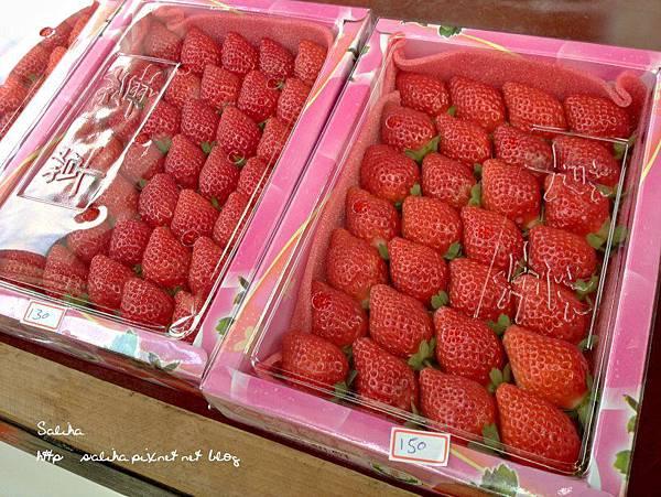 大湖草莓季2 (1).jpg