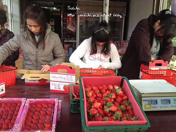 大湖草莓季2 (2).jpg