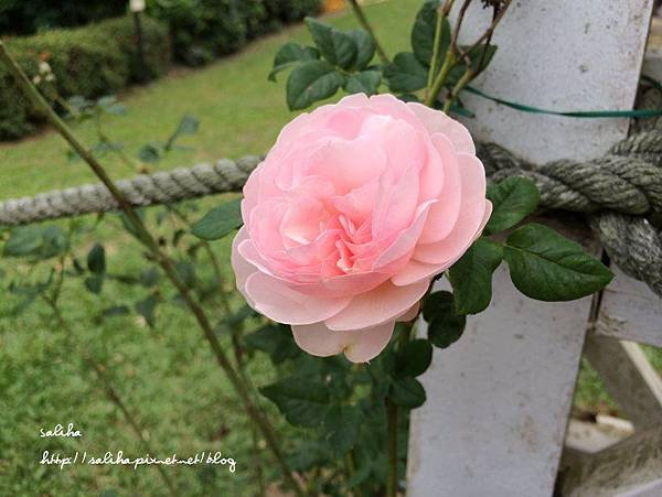 士林官邸賞菊花 (13).jpg