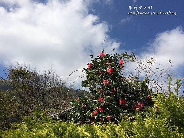 陽明山美食竹仔湖餐廳山產吉園葡 (6).jpg