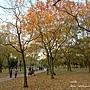 大安森林公園 (1).jpg