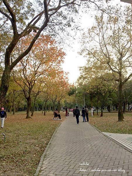 大安森林公園 (2).jpg