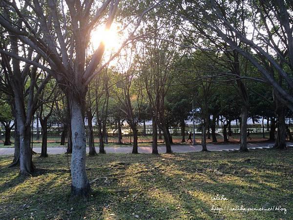 大安森林公園 (3).jpg
