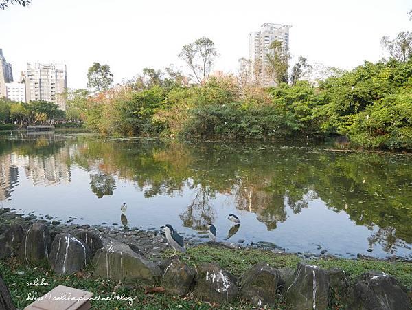 大安森林公園 (5).JPG