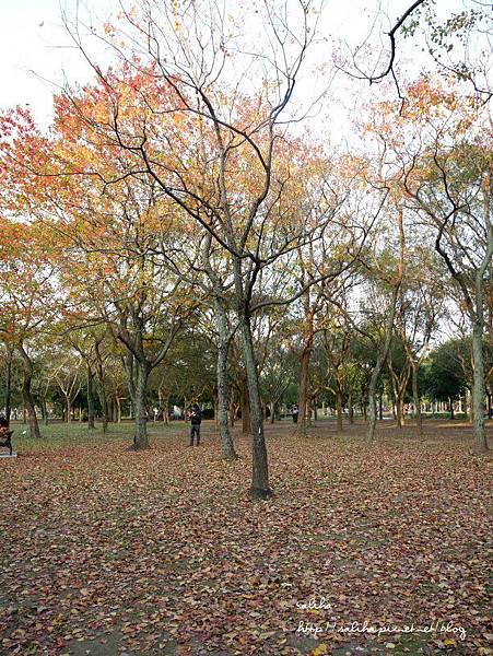 大安森林公園 (7).JPG