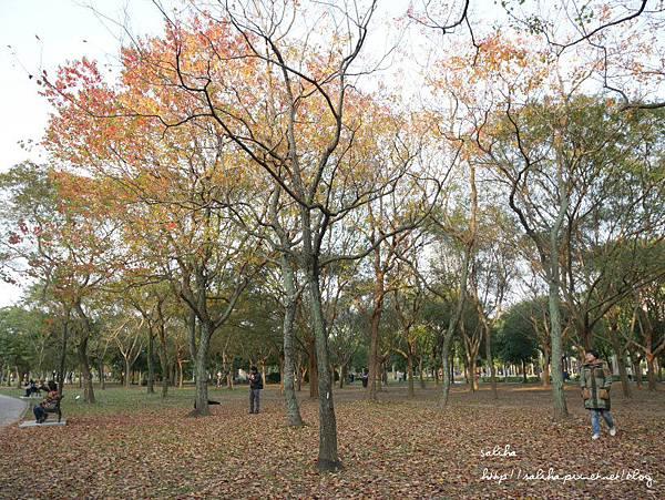 大安森林公園 (8).JPG