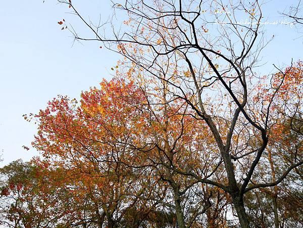 大安森林公園 (9).JPG