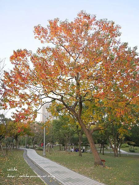 大安森林公園 (12).JPG